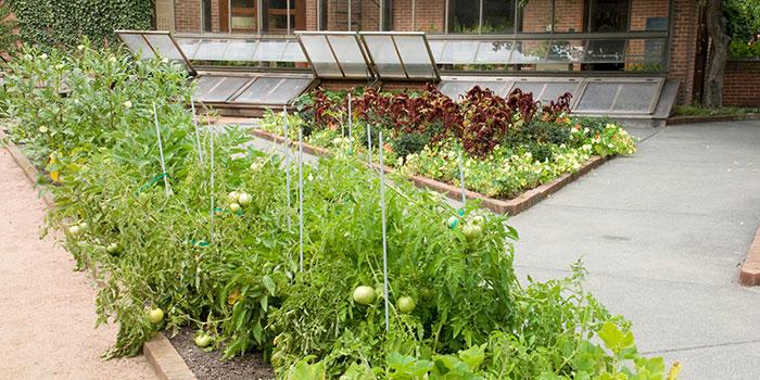 Regenstein garden