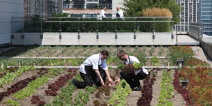 Rooftop Farm garden