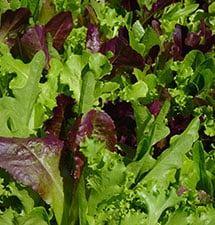 Lettuce (Cold Mix)