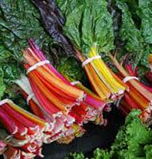 chard (bright lights)