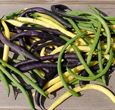 tri-color bush beans