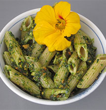 Nasturtium Leaf Pesto