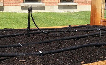 Example of drip-line irrigation