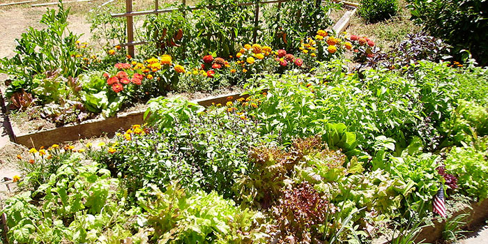 Garden with dense plants