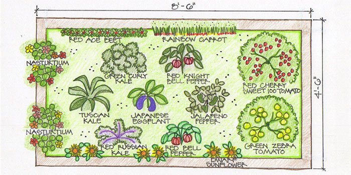 Garden map illustration