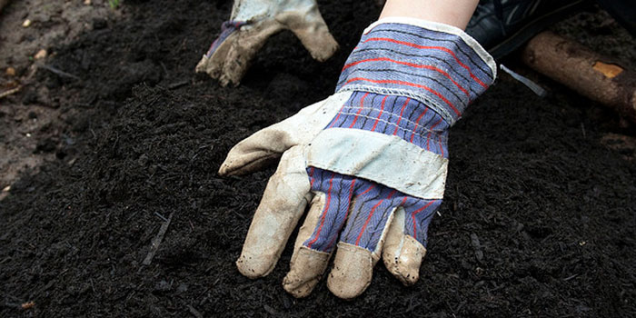 Hands in healthy soil