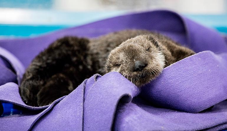 Shedd Aquarium's Fascinating Creatures