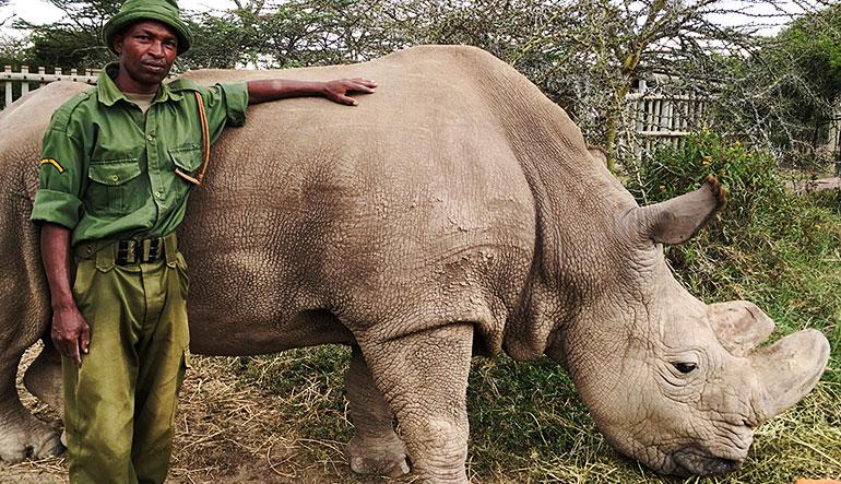 Zachary Mutai and Sudan, last male northern white rhino.