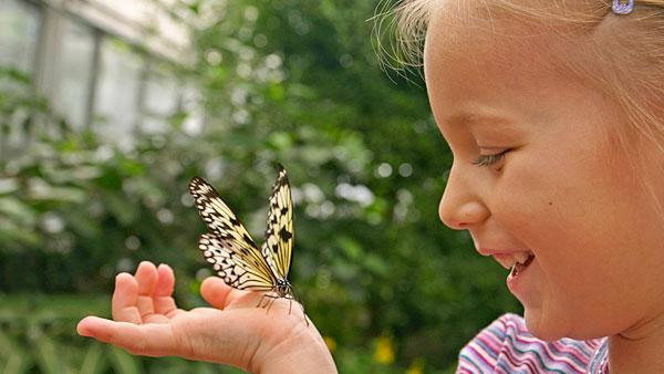 Butterfly on little girl's hand.