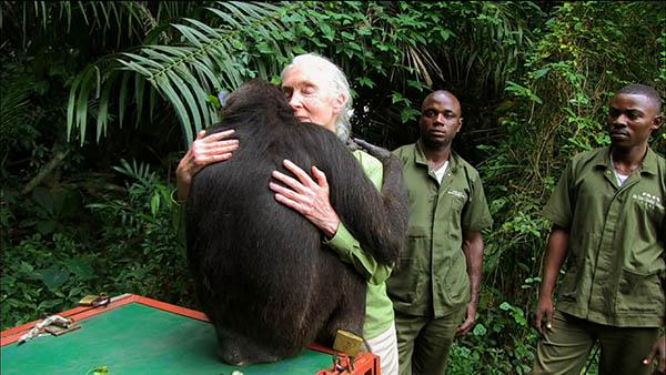 Jane Goodall hugging a chimpanzee. Photo: Tigress Productions