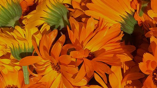 Bright orange flowers.
